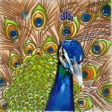 "6""x6"" Peacock"
