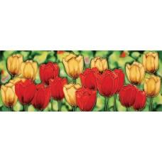 """6"""" X 16"""" Tulips"""